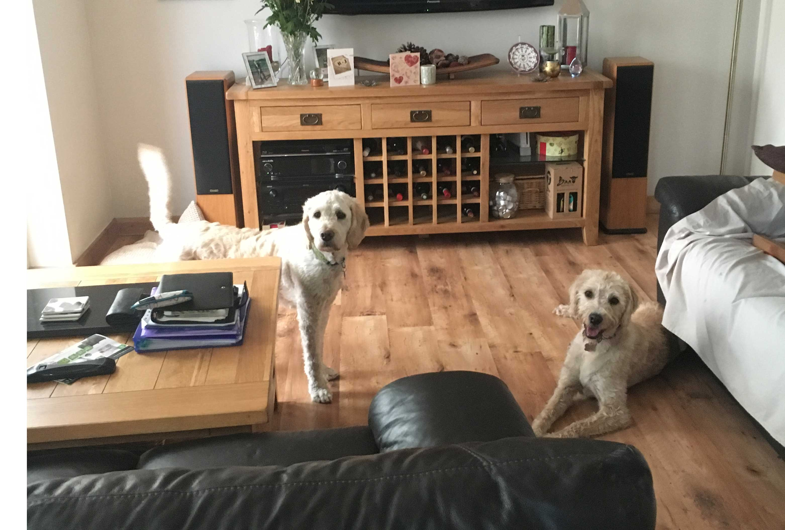 Home Boarders 2018