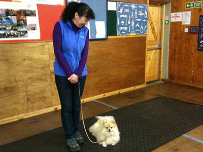 One to One Sessions at Padders Dog Training